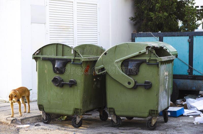 Chien égaré près des décharges de déchets photo libre de droits