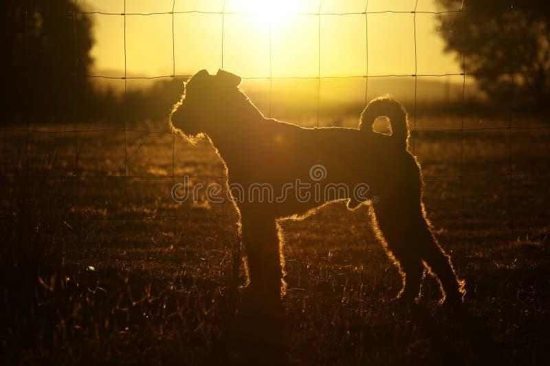 Chien abstrait d'ensemble de silhouette de fond dans l'Australie de maison de pays de coucher du soleil image stock