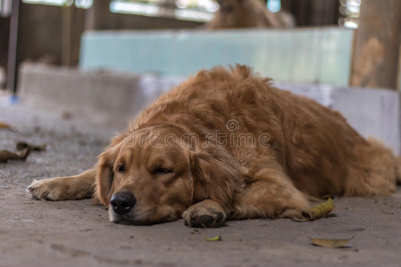 Chien amical photo stock