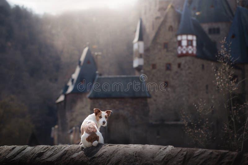 Chien au château gothique Un petit terrier dans un endroit mystique image libre de droits