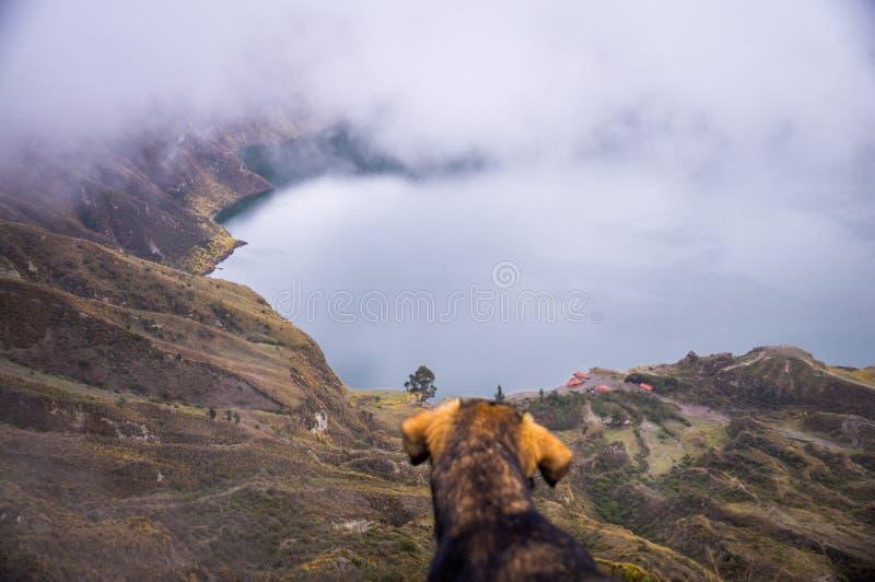 Chien au lac de cratère de Quilotoa, Equateur image libre de droits