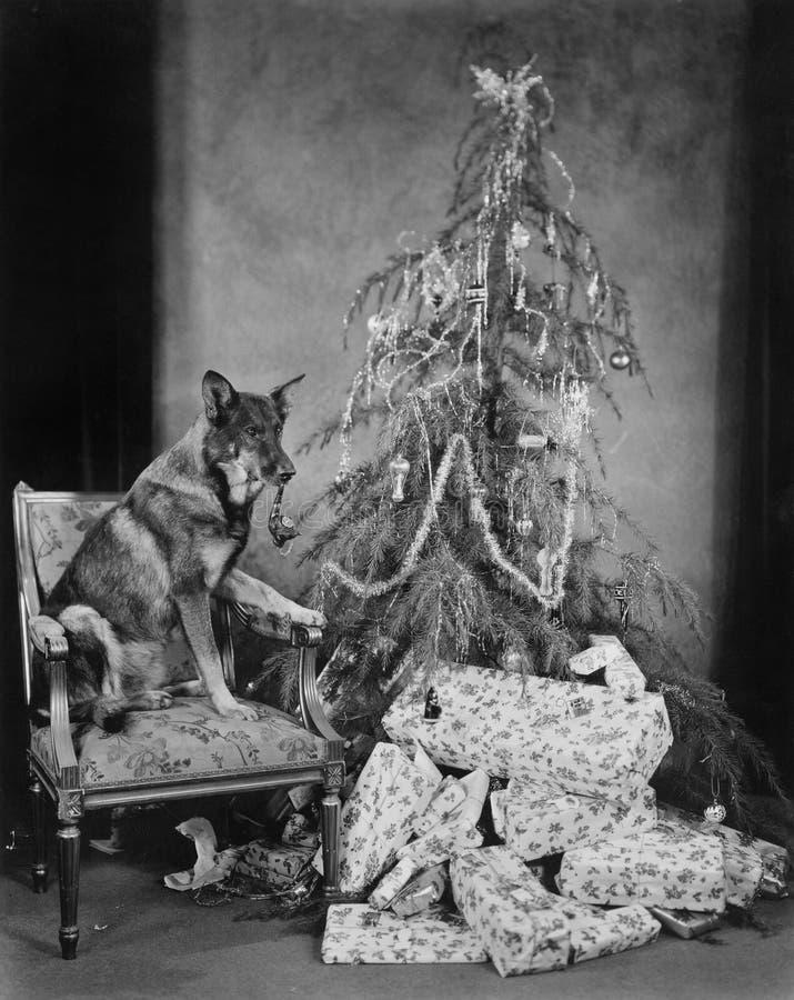 Chien avec l'arbre et les présents de Noël image libre de droits