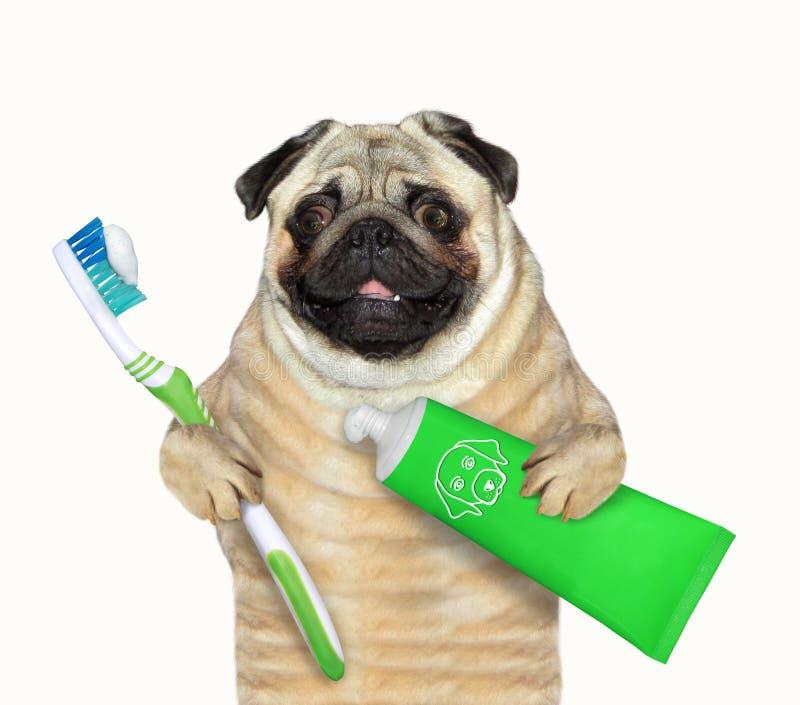 Chien avec la brosse à dents et la pâte dentifrice 2 photos stock