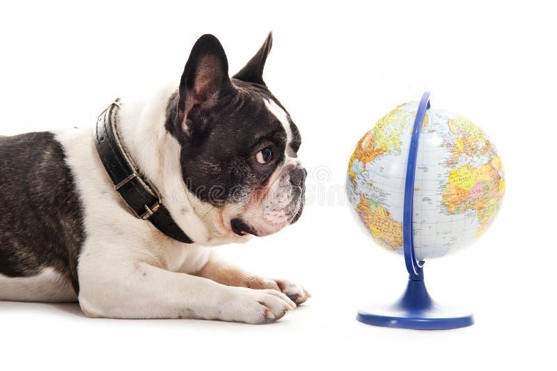Chien avec la carte du monde image stock