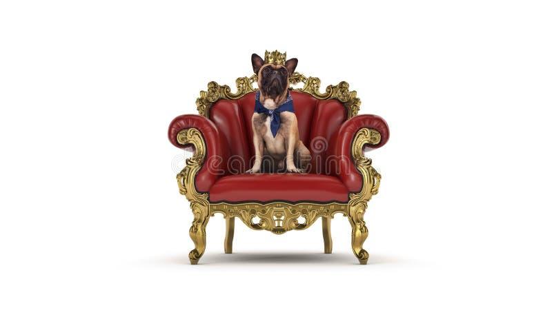 Chien avec la couronne dans une chaise photos stock
