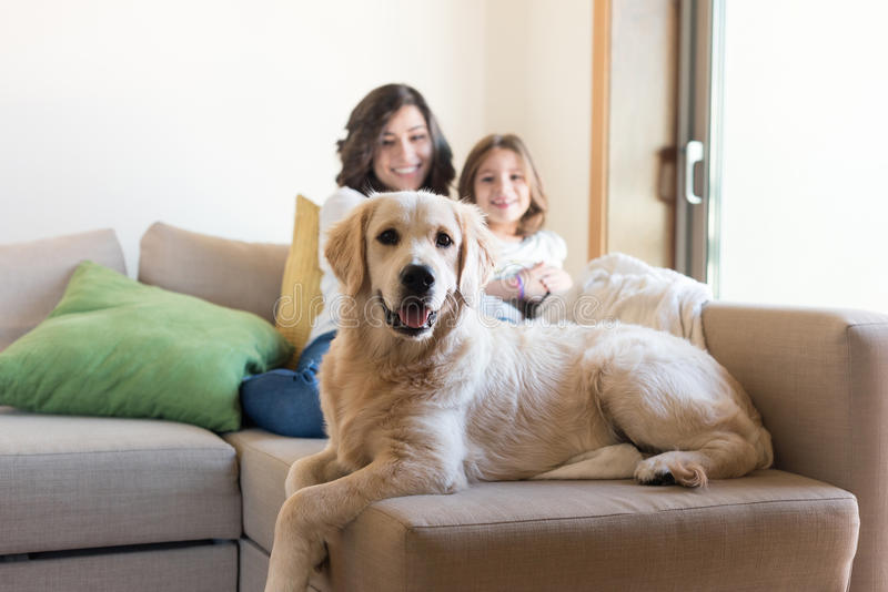 Chien avec la famille humaine à la maison images stock