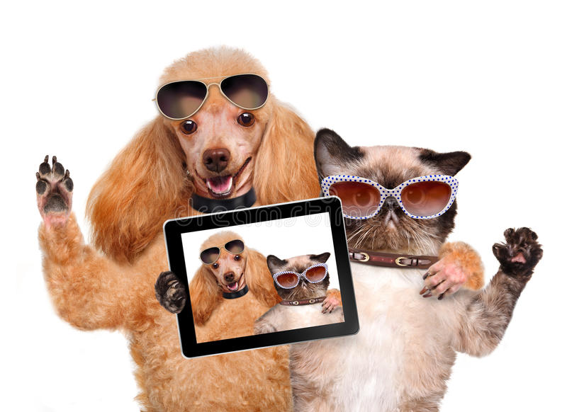 Chien avec le chat prenant un selfie ainsi qu'un comprimé image stock