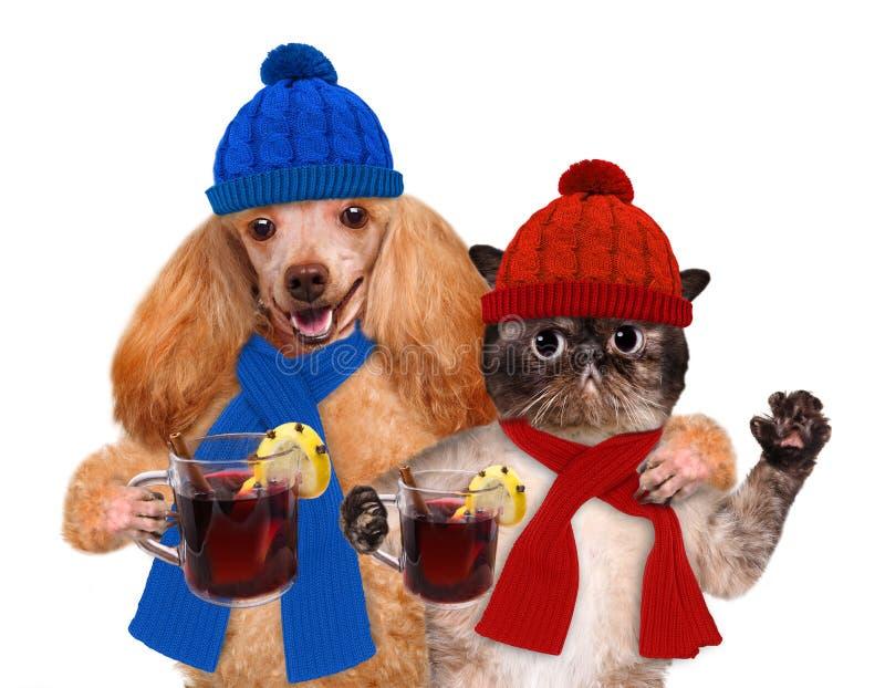Chien avec un chat, se tenant dans les pattes du vin chaud photographie stock libre de droits