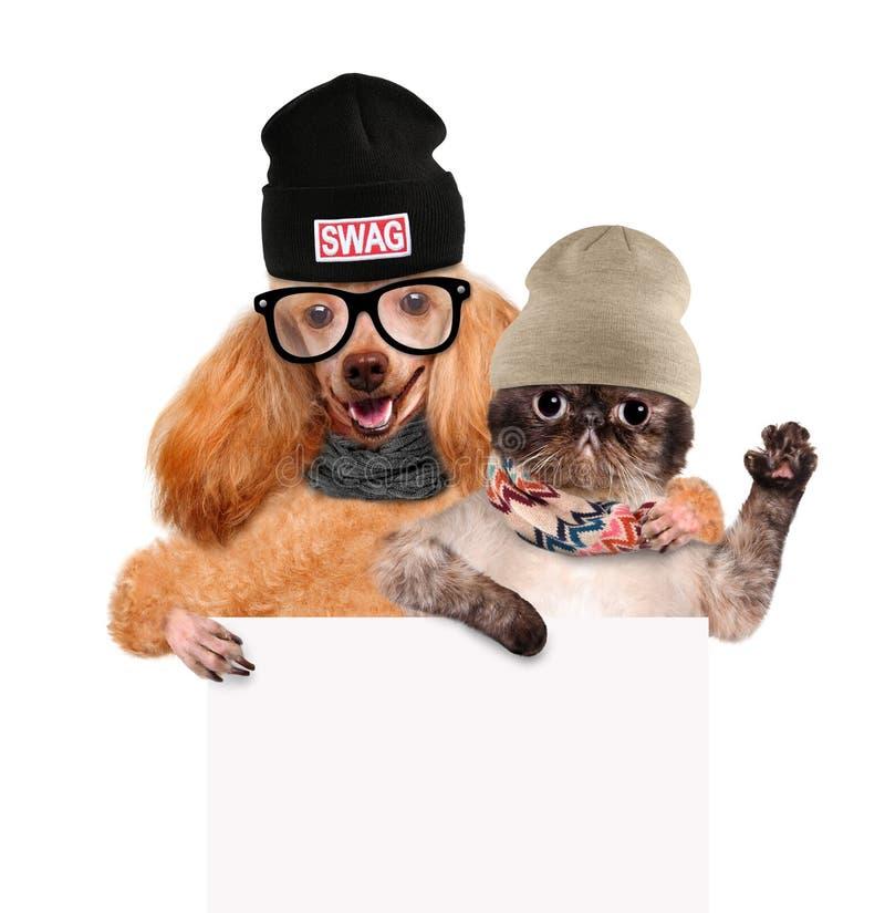 Chien avec un chat se tenant dans sa bannière de blanc de pattes photo libre de droits