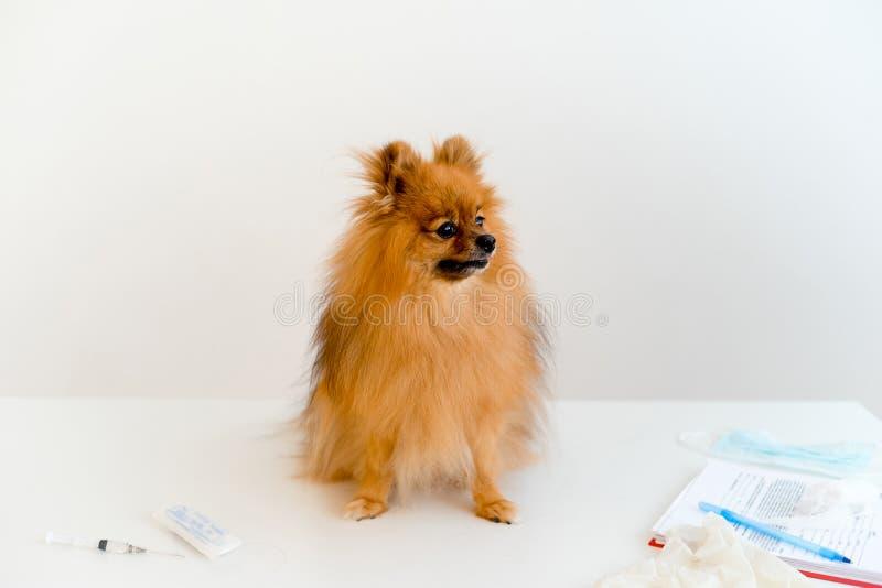 Chien avec un vétérinaire photo stock