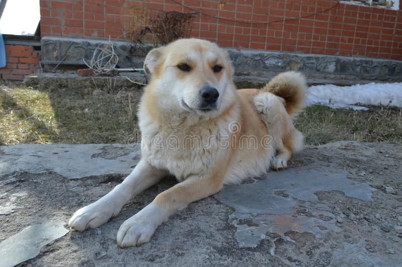 chien beau l'autre animal image libre de droits