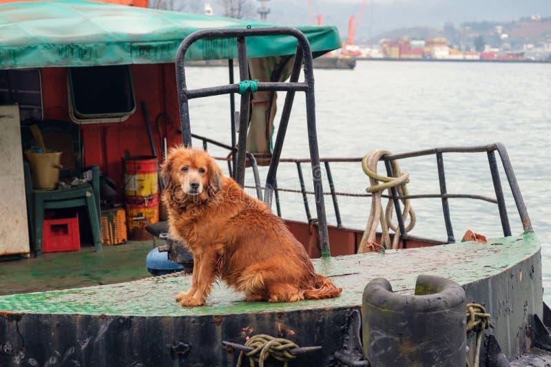 chien brun gardant le remorqueur photo libre de droits
