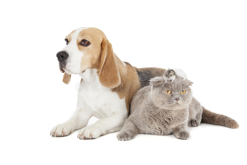 Chien, chat et hamster photo stock