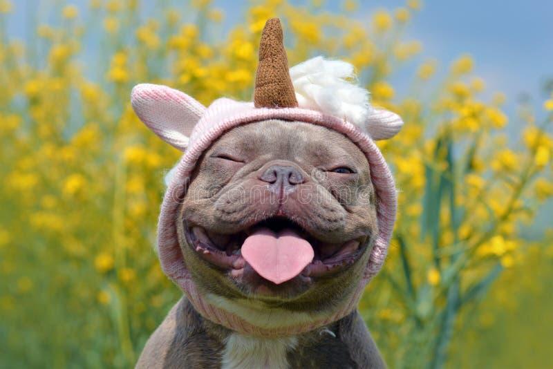 Chien coloré bringé lilas de bouledogue français avec le chapeau rose drôle de licorne, les yeux fermés et la langue collant sur  photographie stock