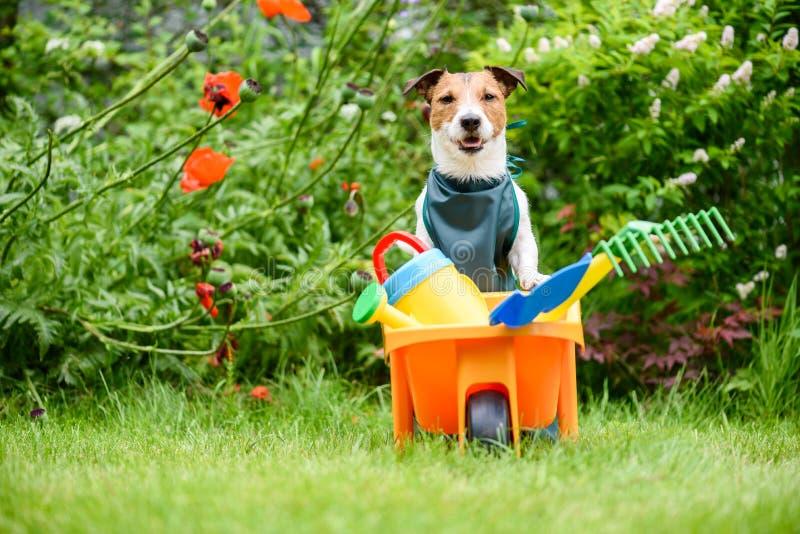 Chien comme jardinier avec le chariot plein des outils de jardin du ` s d'enfants de jouet à la pelouse d'arrière-cour images libres de droits