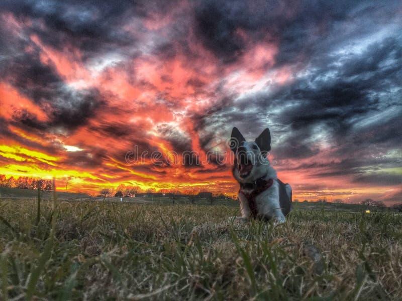Chien d'écorcement au coucher du soleil image libre de droits