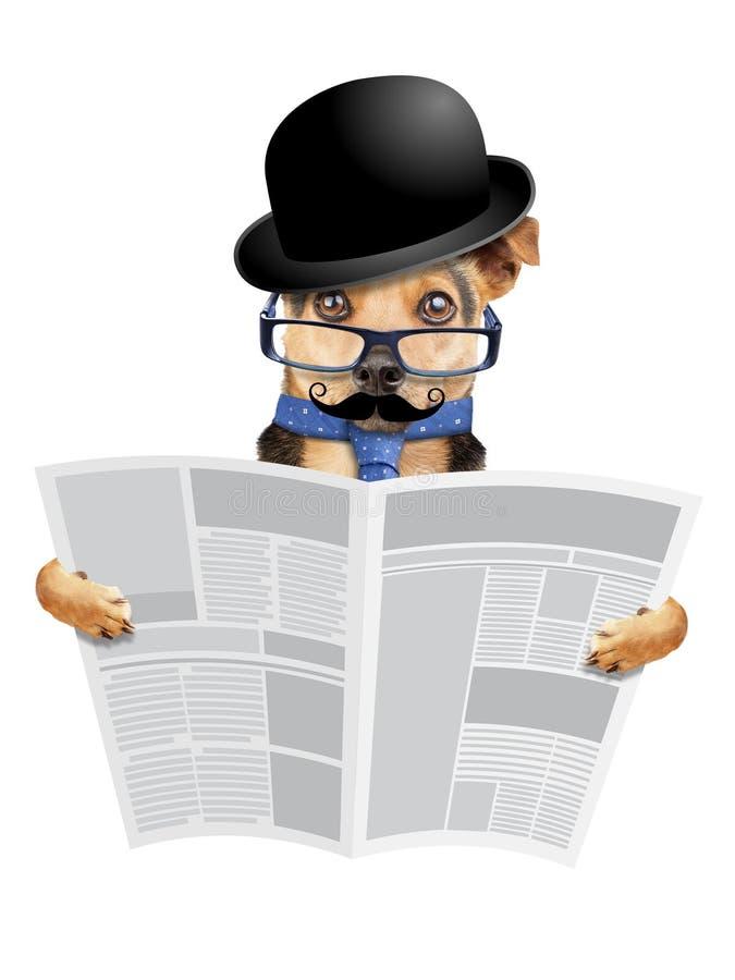 Chien d'affaires anglais avec bowler lisant un journal vierge isolé photos libres de droits
