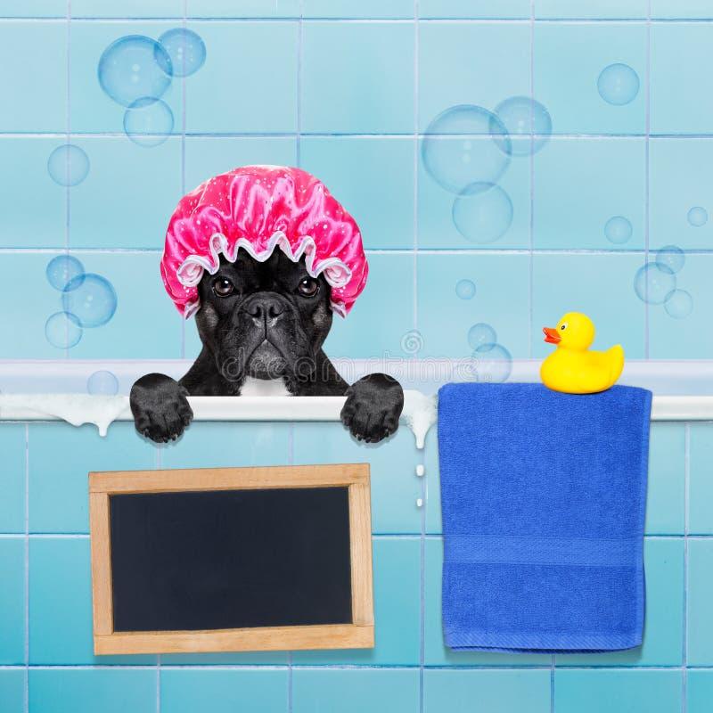 Chien dans la douche photographie stock libre de droits