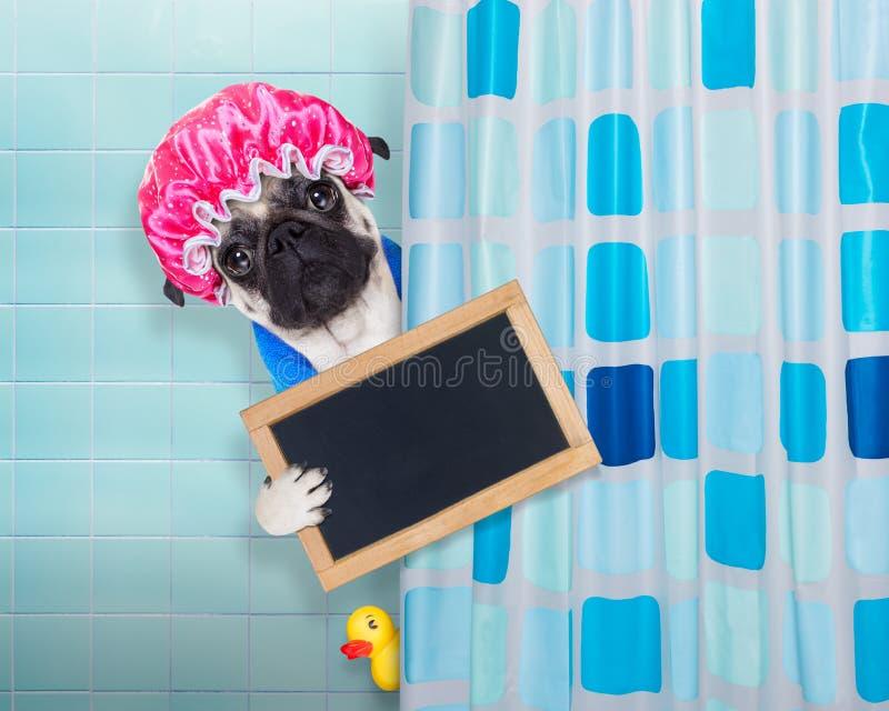 Chien dans la douche image stock