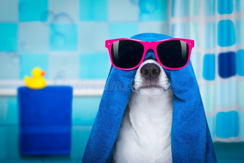 Chien dans la douche ou la station thermale de bien-être photo libre de droits