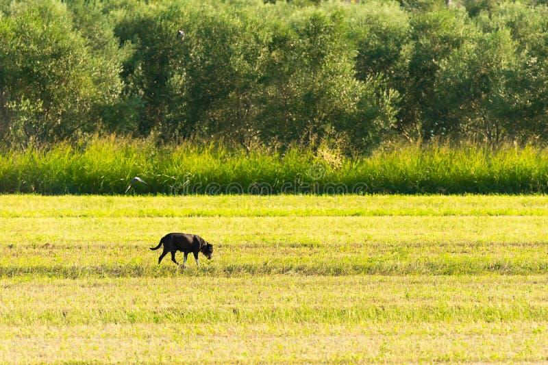 Chien dans la nature Un paysage bucolique photographie stock libre de droits
