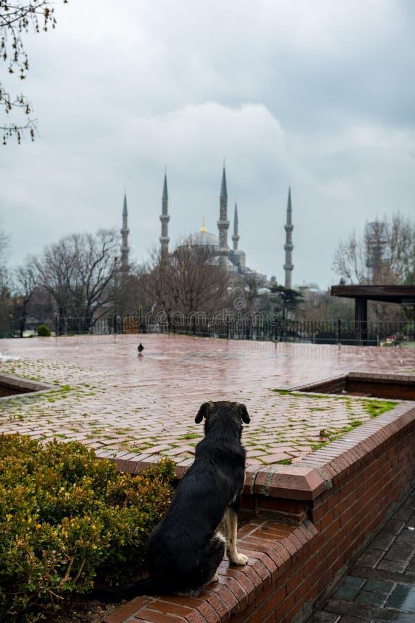 Chien dans la place de Sultanahmet images libres de droits