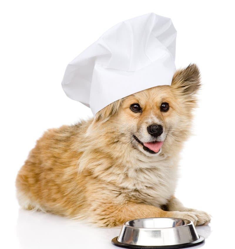 Chien dans le chapeau du chef priant pour la nourriture images stock