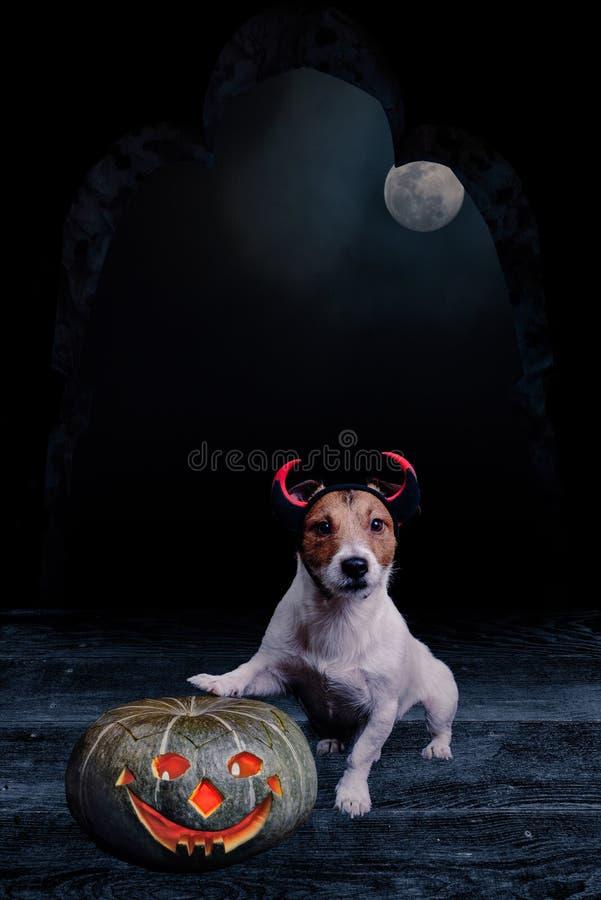 Chien dans le costume de Halloween avec le potiron au vieux château rampant la nuit clair de lune photo stock