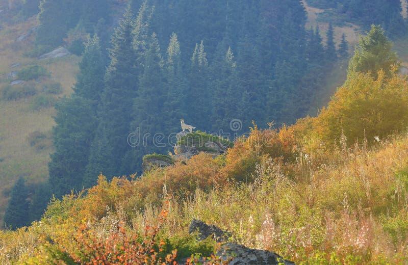 Chien dans les montagnes image libre de droits