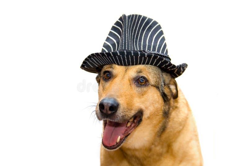 Chien dans un chapeau photo stock