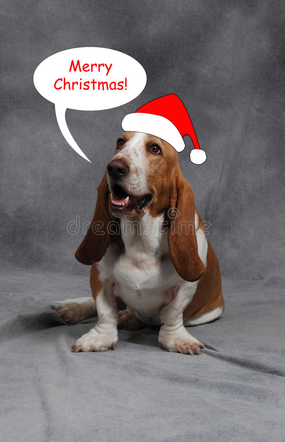 Chien de basset de Noël image stock