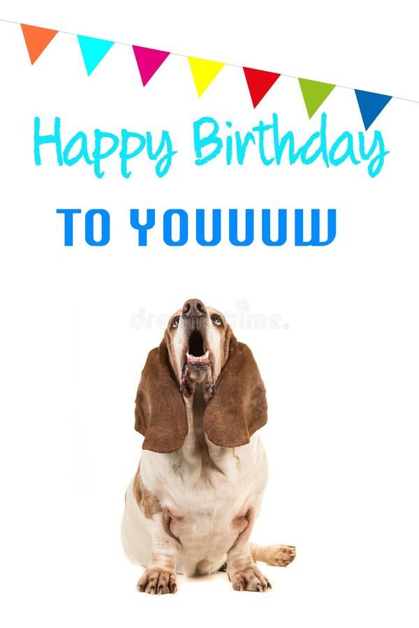 Chien de basset recherchant et texte de chant joyeux anniversaire sur une carte d'anniversaire image libre de droits