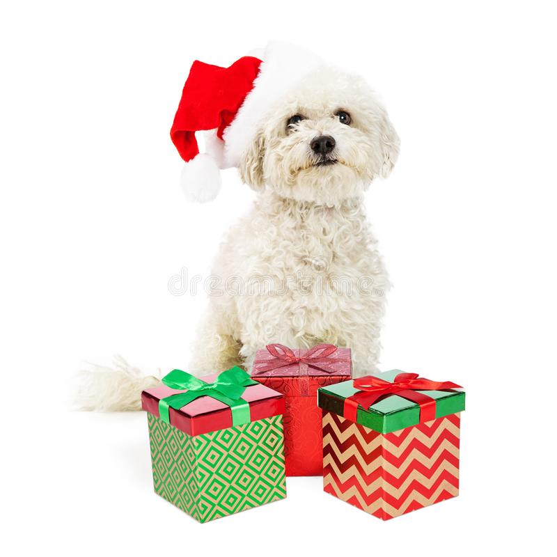 Chien de Bichon avec des cadeaux de Noël photo libre de droits