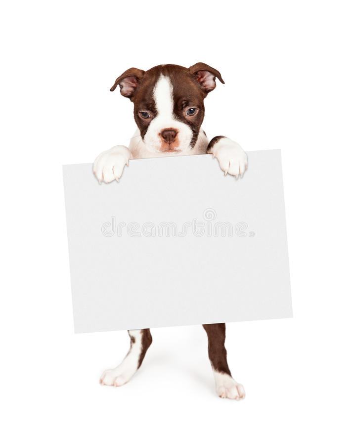 Chien de Brown Boston Terrier tenant le signe vide images libres de droits