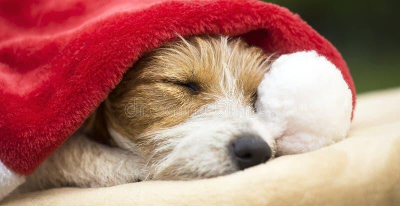 Chien de cadeau de Noël dormant avec le chapeau de Santa photos libres de droits