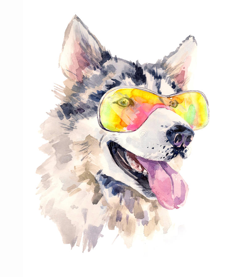 Chien de chien de traîneau sibérien d'aquarelle en verres de soleil frais illustration de vecteur