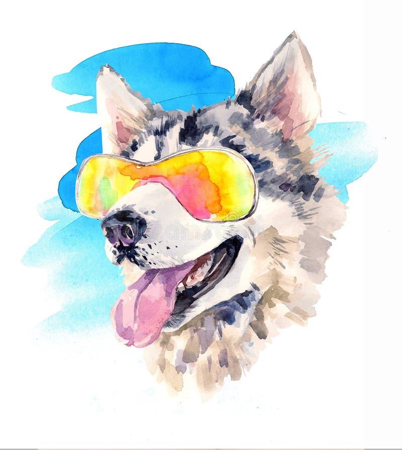 Chien de chien de traîneau sibérien d'aquarelle en verres de soleil frais illustration libre de droits