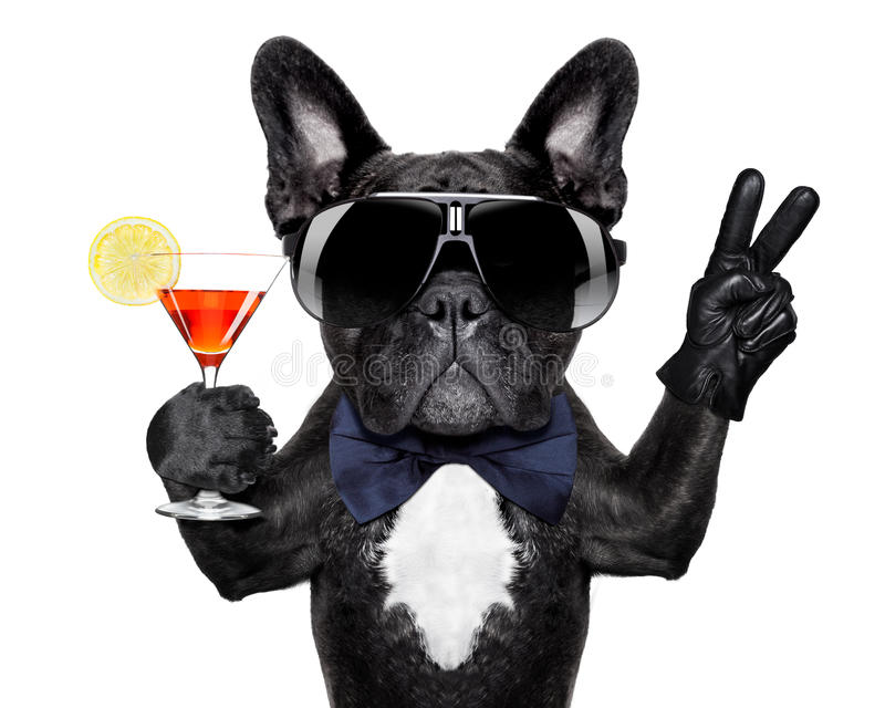 Chien de cocktail photos stock