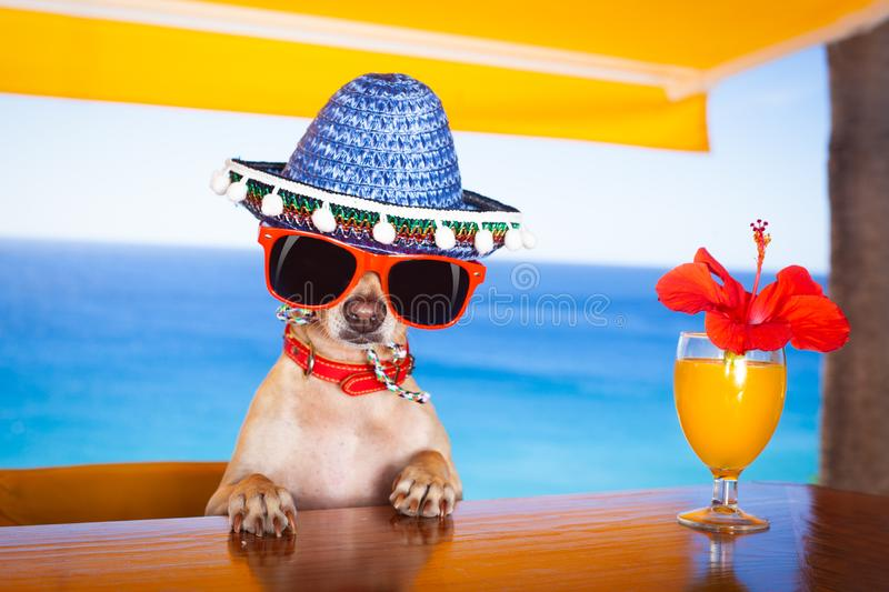 Chien de cocktail au club de plage images stock