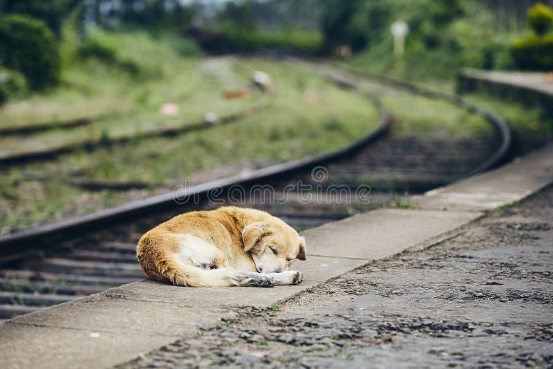 Chien de fidélité dormant à la station de train image libre de droits