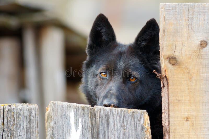 Chien de garde noir rustique simple derrière une barrière photo libre de droits