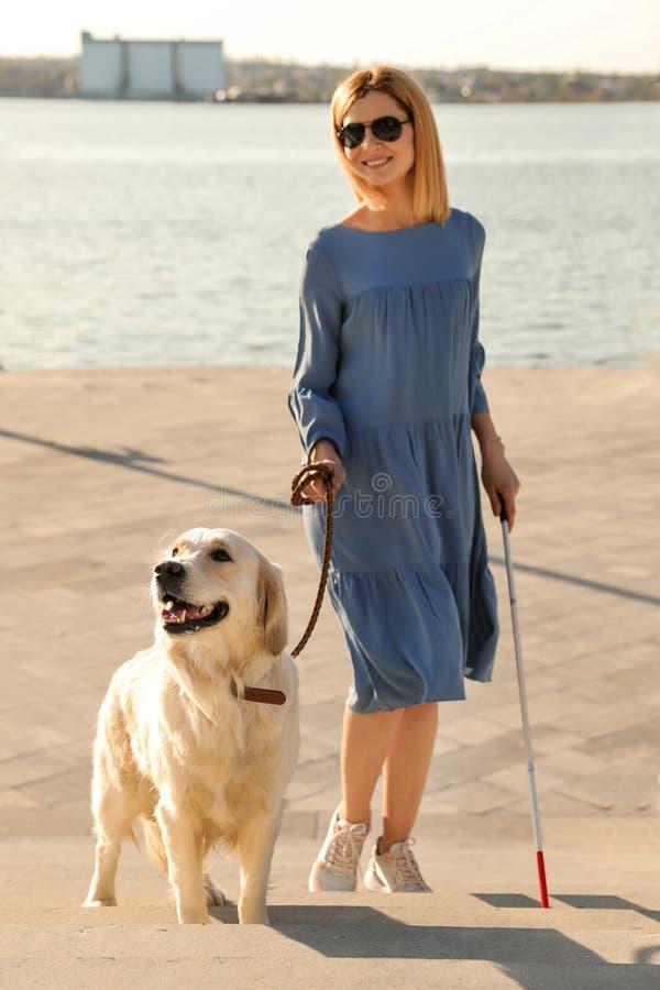 Chien de guide aidant la personne aveugle avec la longue canne allant escaliers image libre de droits