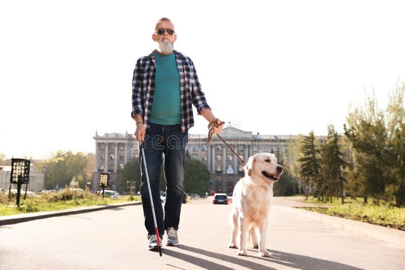 Chien de guide aidant la personne aveugle avec la longue marche de canne images libres de droits