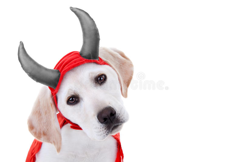 Chien de Halloween photographie stock
