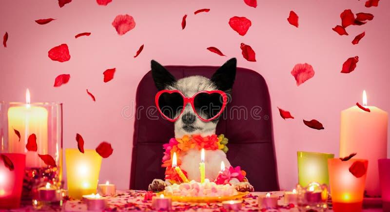 Chien de joyeux anniversaire de valentines photographie stock libre de droits
