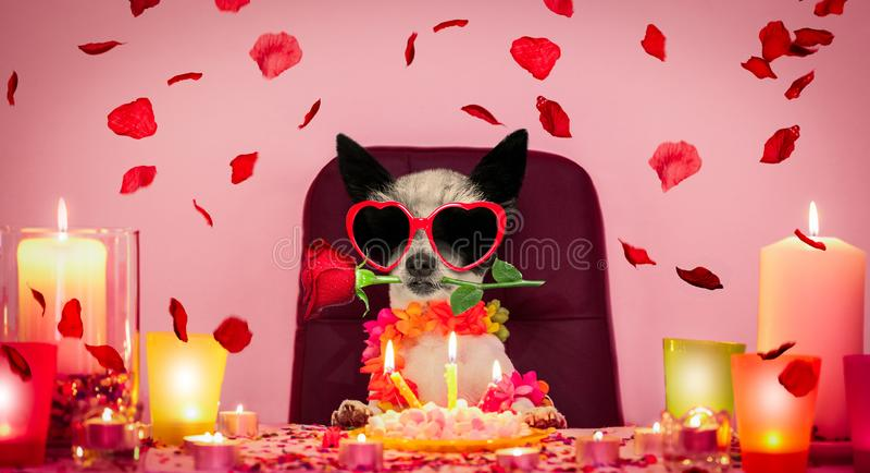 Chien de joyeux anniversaire de valentines images libres de droits