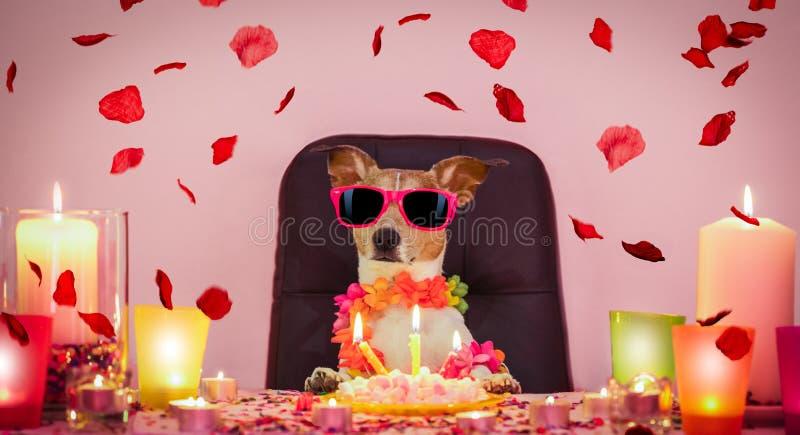 Chien de joyeux anniversaire de valentines photographie stock