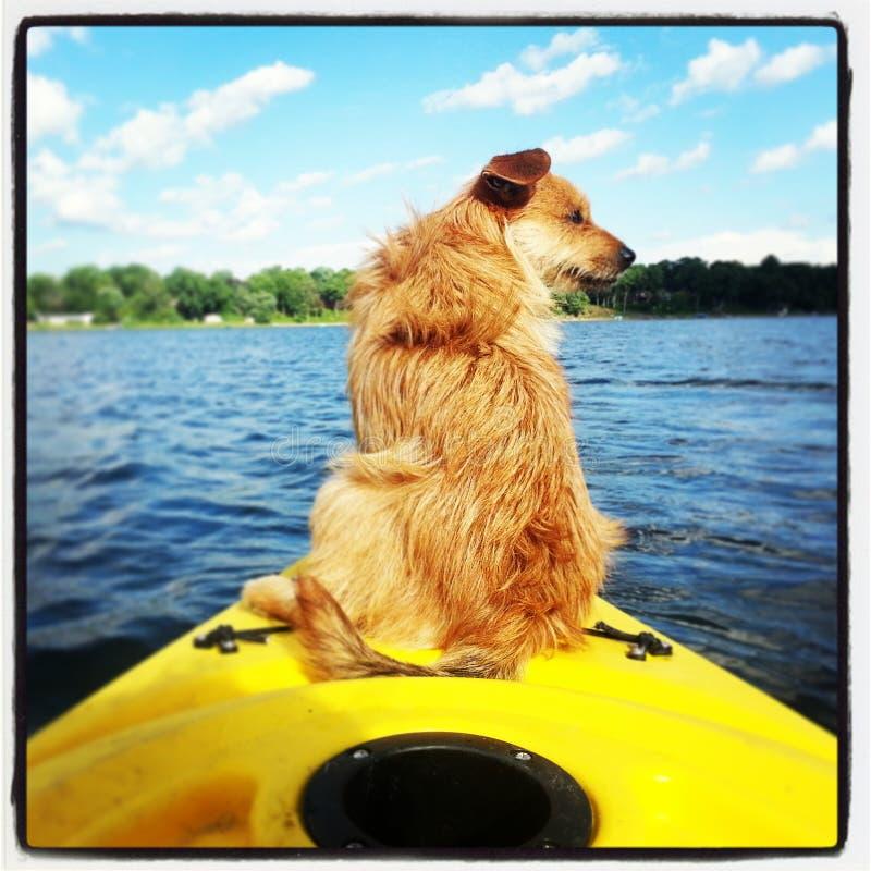 Chien de kayak photographie stock libre de droits