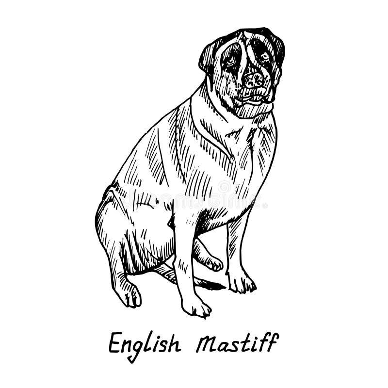 Chien de la race anglaise de mastiff se reposant, croquis tiré par la main de griffonnage avec l'inscription, illustration d'isol illustration de vecteur