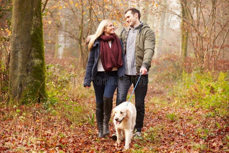 Chien de marche de couples par la région boisée d'hiver photographie stock libre de droits